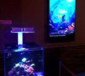 Nasze akwarium w kinie Helios
