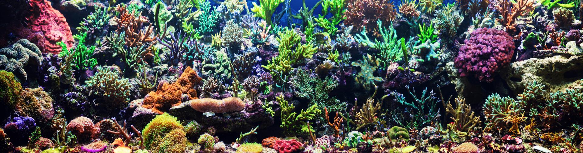 Akwarystyka morska szczecin 1