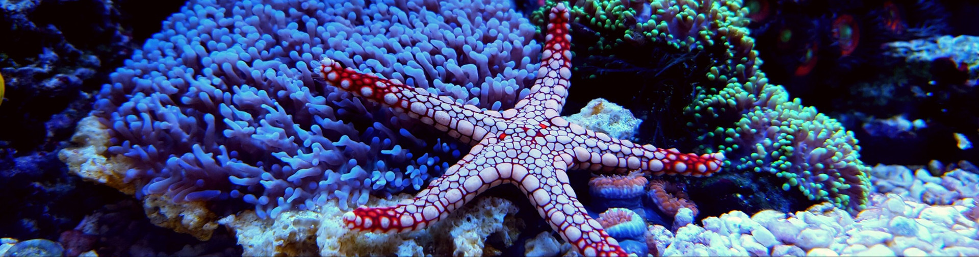 Akwarystyka morska szczecin 2