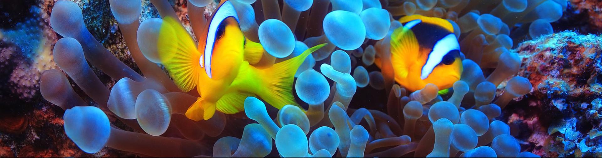Akwarystyka morska szczecin 4