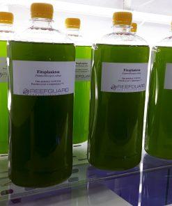 Żywy fitoplankton phytoplankton 1L