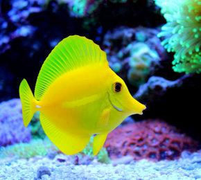 30.05.2017 Dostawa ryb z certyfikatem odłowów naturalnych (bez użycia cyjanku)