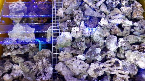 Żywa Skała Fiji Mariculture