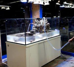 Projekt akwarium morskie 1600 litrów
