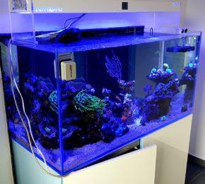 Automatyczne akwarium morskie bez efektu dojrzewania – Konin