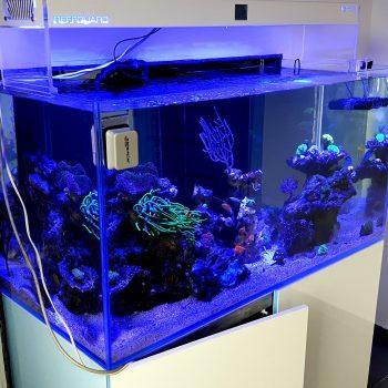 Akwarium Morskie Automatyczne 500l Konin Reefguard Szczecin 350x350