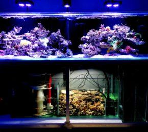 Projekt 700 litrów w obiegu – akwarium Full Opti o wymiarach 200x60x50cm