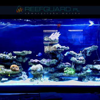 Akwarium Morskie Reefguard Szczecin 11 350x350
