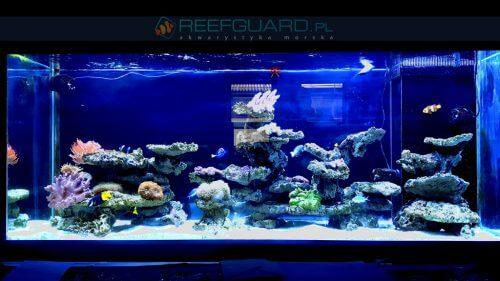 Aquascaping - wymarzona aranżacja w akwarium morskim