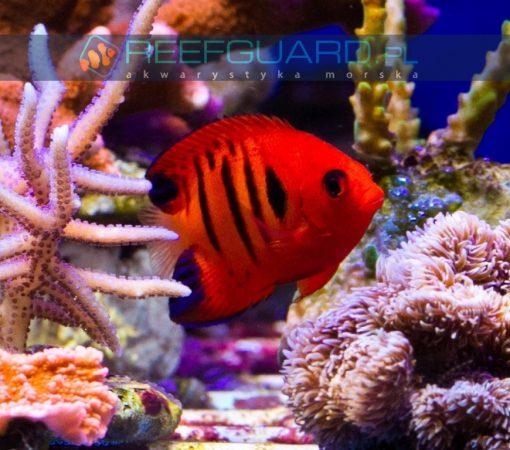 akwarium morskie szczecin akwarystyka morska
