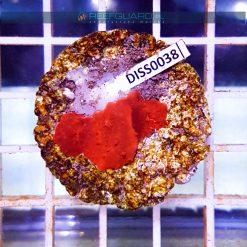 Discosoma RED Fluo WYSIWYG DISS0038 szczecin