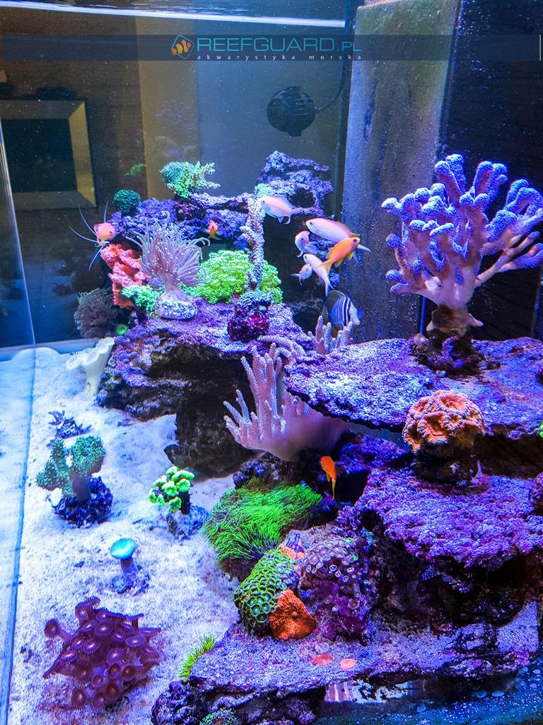 reefguard realizacja realizacje 500 litrow akwarium morskie szczecin