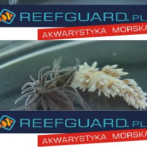 Reefguard szczecin