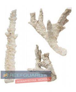Fiji Branch Reefguard Szczecin