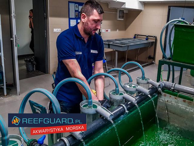 Projekty komercyjne z reefguard.pl