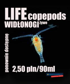 żywe widłonogi life copepods 90ml