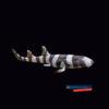 Chiloscyllium punctatum rekin bambusowy Brownbanded Bamboo Shark 30cm